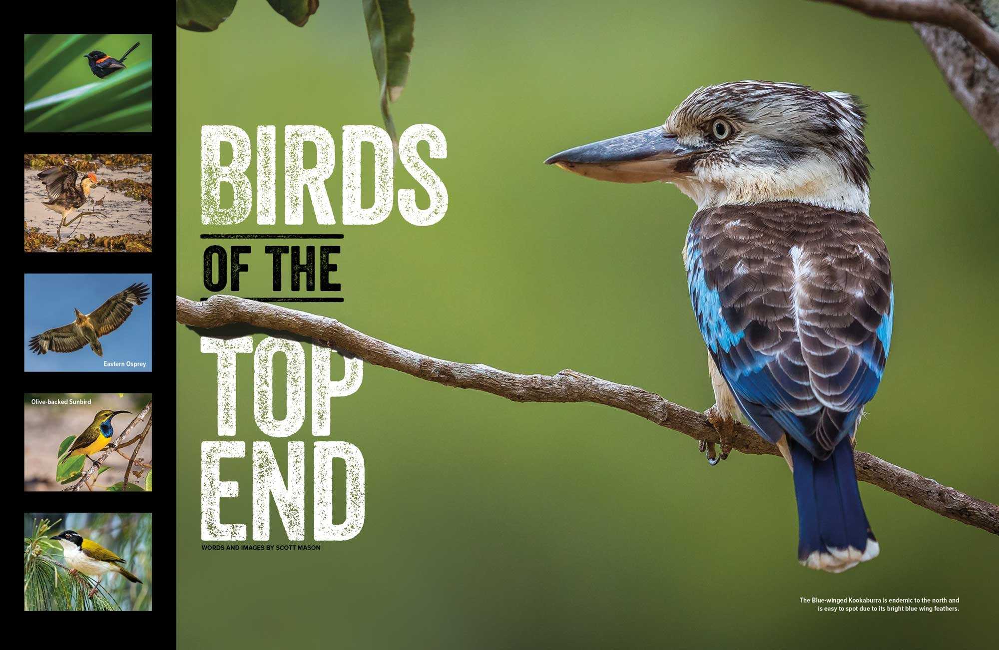 Birds of the Top End Photo Essay with Scott Mason