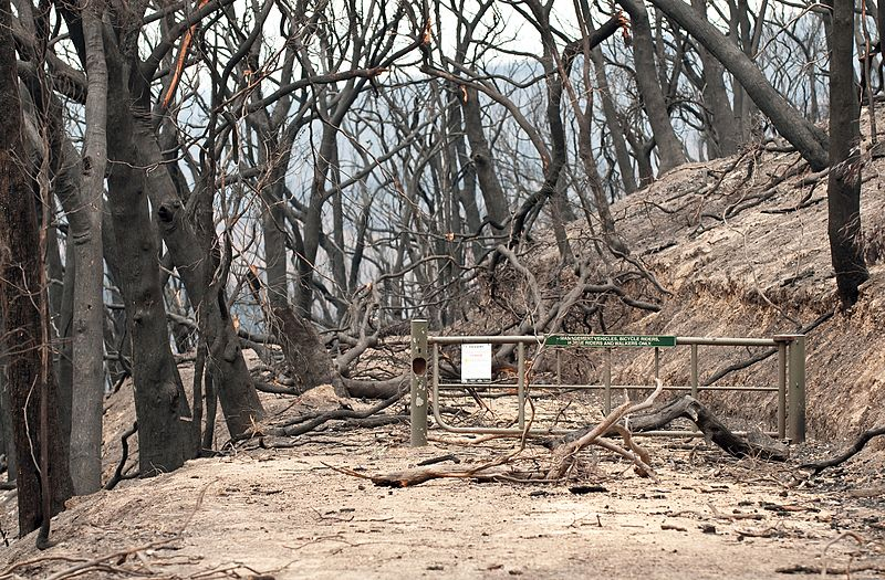 National Parks NSW and State Forests ask for patience as they begin re-opening parks and tracks after bushfires