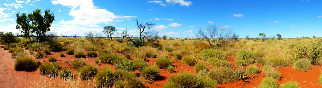Everything you need to know about spinifex… and how to stop it killing your 4X4